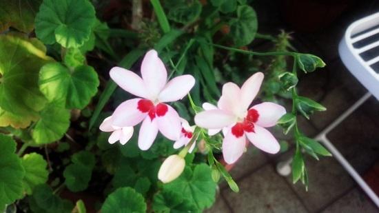 庭の花5月