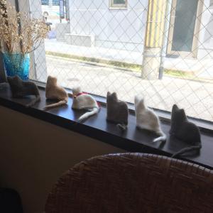 猫毛フェルト人形初級集合写真☆