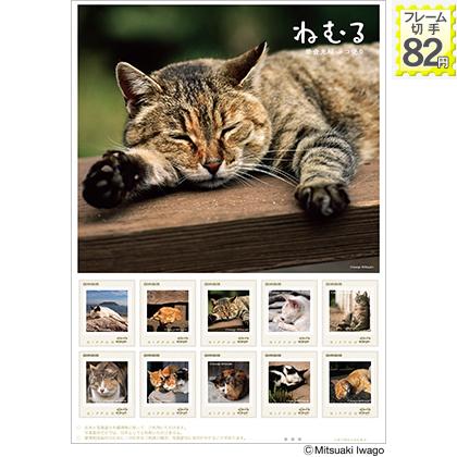 岩合さんのネコ便り3☆