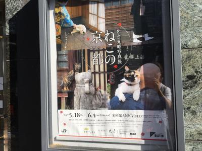 岩合さん写真展「ねこの京都」1☆