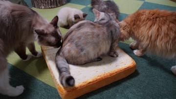 トーストの具になった猫! 1
