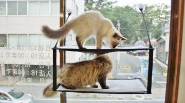 窓に張り付く猫ハンモック! その2 2
