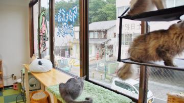 窓に張り付く猫ハンモック! その2 3