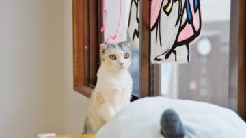 窓に張り付く猫ハンモック! その2 4