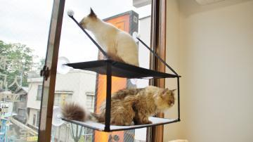 窓に張り付く猫ハンモック! その2 5