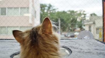 窓に張り付く猫ハンモック! その2 6