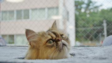 窓に張り付く猫ハンモック! その2 7
