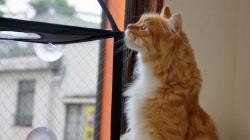 窓に張り付く猫ハンモック! その3 1