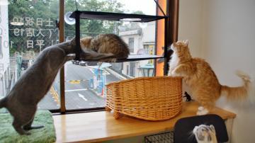 窓に張り付く猫ハンモック! その3 2