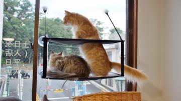 窓に張り付く猫ハンモック! その3 3