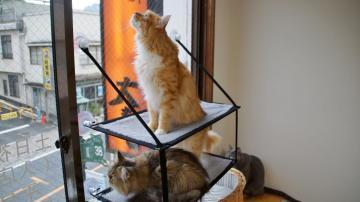 窓に張り付く猫ハンモック! その3 4