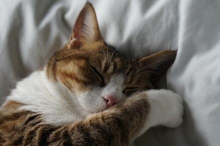 起きる気は今ありません。