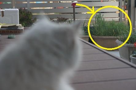 猫草畑が見える