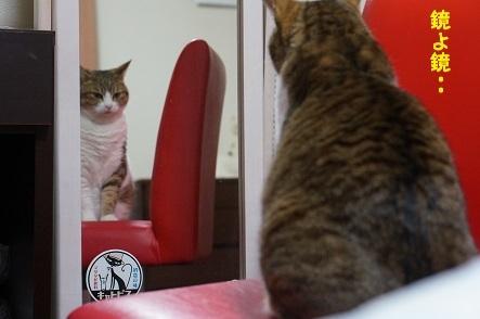 世界でイチバンかわいいお猫はだぁれ?