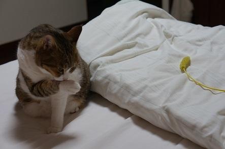 寝る前の準備に