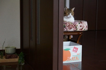 ここでかつおが来るのを見張ってるんだ