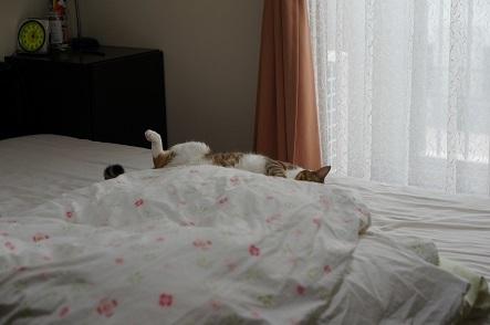 布団の陰に寝子