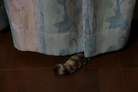 真夜中の監視猫