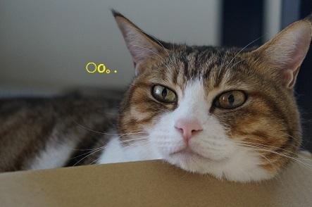 睡魔がちょろちょろしてきた猫