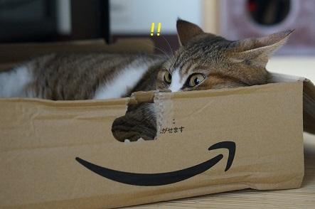 物音に目がパチンと覚めた猫