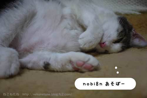 nobi8nあそぼー♪