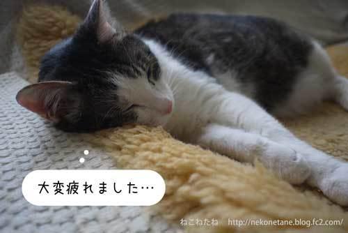 大変疲れました。