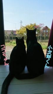 ココちゃん&小次郎くん