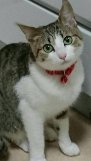 楓ちゃん 先住猫さん