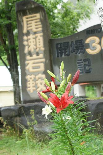 20170723尾瀬岩倉ゆり園1
