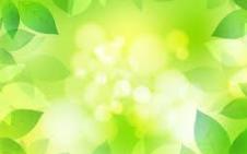 緑 葉っぱ