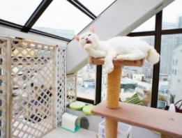 猫付きマンション