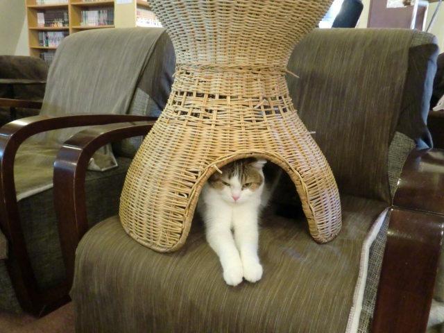 狭いとこ大好き猫