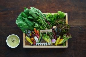 野菜畑の箱庭バーニャサラダ