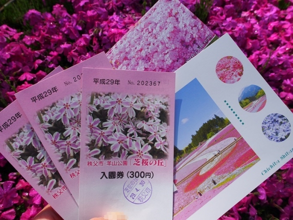 羊山芝桜(6)