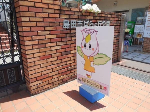 島田ばら(3)
