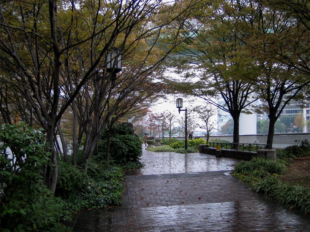 雨の中之島緑道