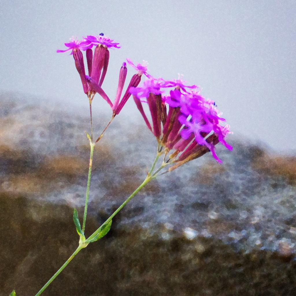 花と健康とケンコーミラー500mm