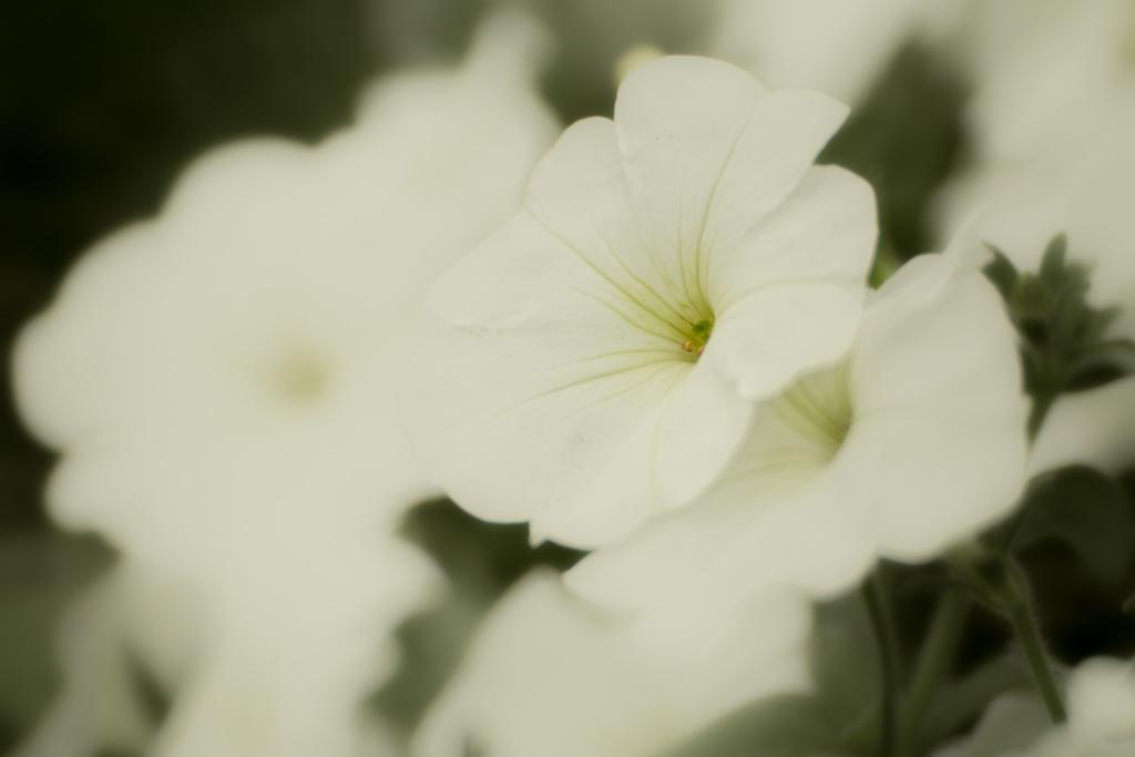 アリエルのグリーティンググロット付近の花