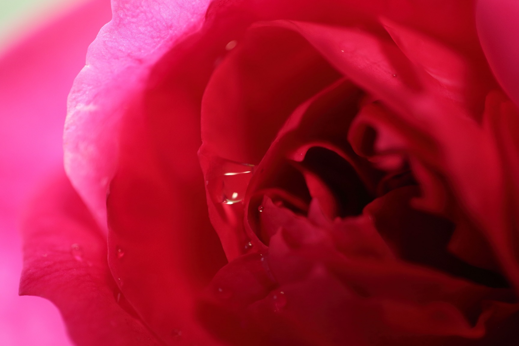 2017 5 13 赤いバラ マクロ練習 ブログ用.jpg