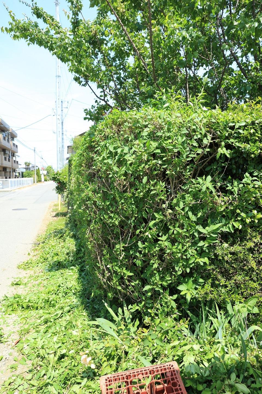 2017 5 22 生垣手入れ後 ブログ用.jpg