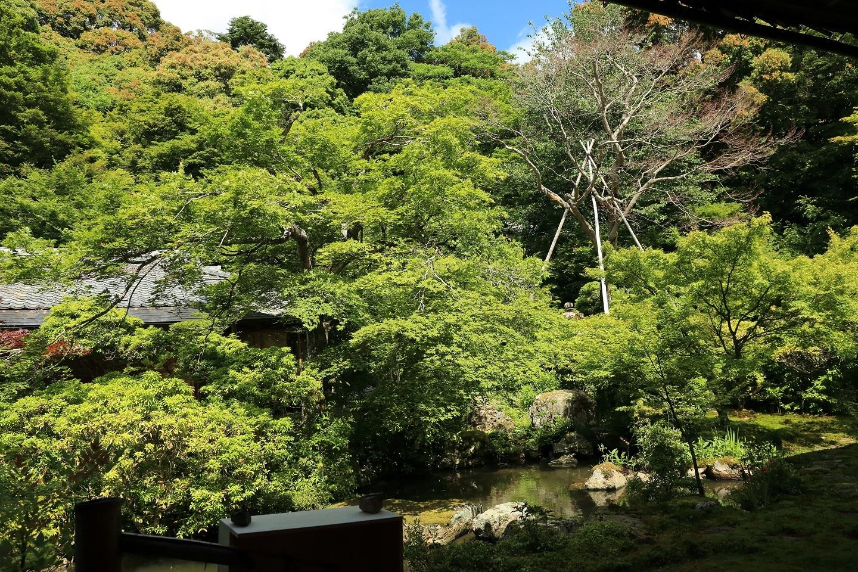 2017 5 27 実相院 池の庭 ブログ用.jpg