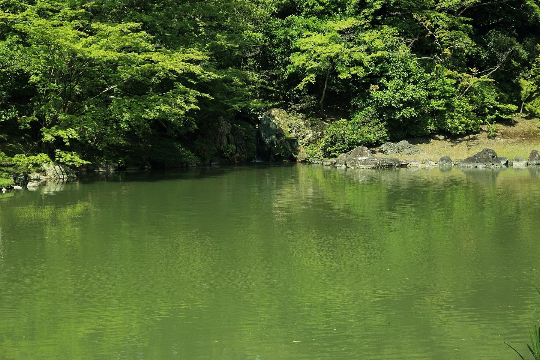 2017 5 27 緑の染まった北池 ブログ用.jpg