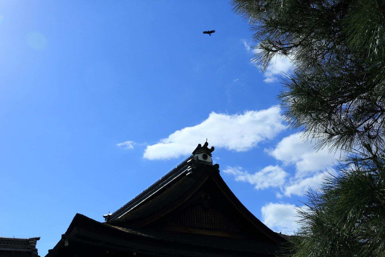 2017 5 27 御所の上に鳥が飛ぶ ブログ用.jpg