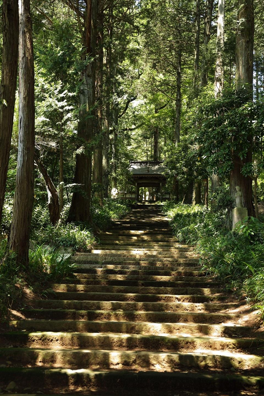 2017 6 17 大雄寺の参道の階段 11時頃 ブログ用.jpg