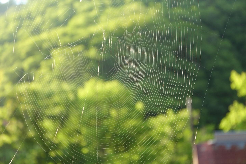 2017 6 24 朝の窓辺の蜘蛛の巣 ブログ用.jpg