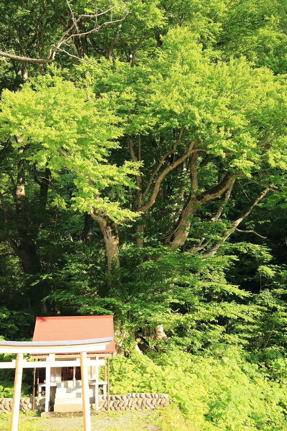 2017 6 24 山の神と桂の巨木 ブログ用.jpg