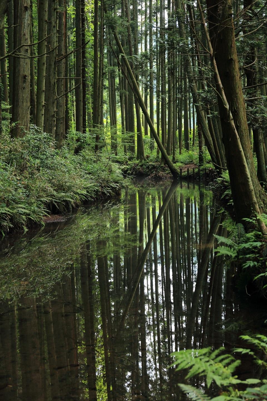 2017 6 25 牛渡川の森林を映して ブログ用.jpg