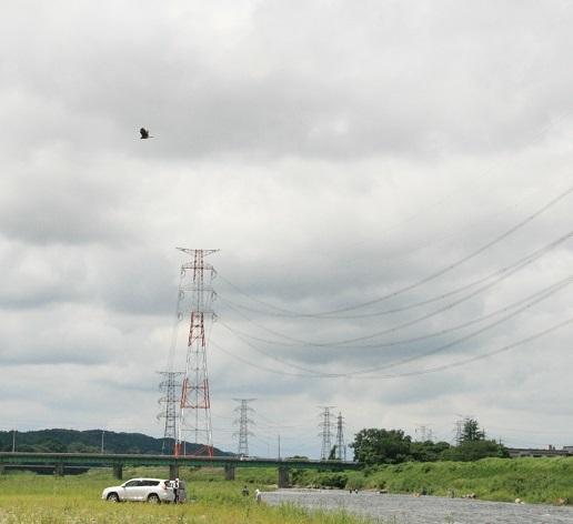 2017 7 28 トンビがお空で輪を描いた ブログ用.jpg