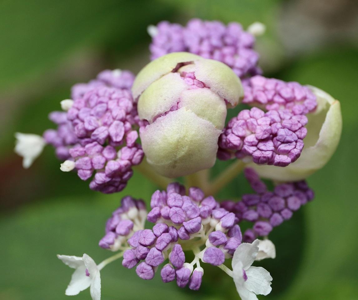 2017 8 20 紫の花 ブログ用.jpg