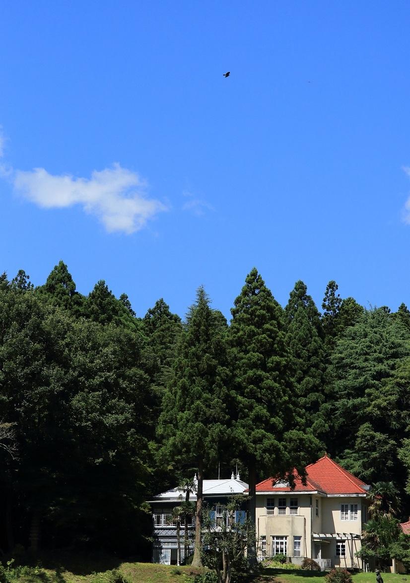 2017 9 1 トンビが舞う矢板農場の別荘 ブログ用.jpg